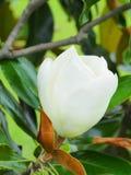 Fleurs en fleur Photo stock