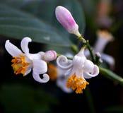 Fleurs en fleur de fenêtre Image libre de droits