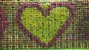 Fleurs en forme de coeur Photo libre de droits