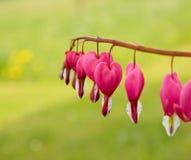 Fleurs en forme de coeur rouges photographie stock
