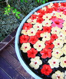 Fleurs en Maldives Image libre de droits