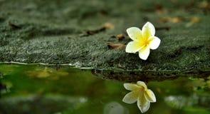 Fleurs en nature photographie stock