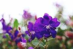 Fleurs en nature photo stock