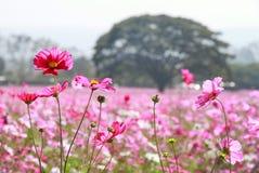 Fleurs en parc Photos libres de droits