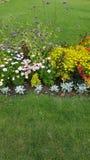 Fleurs en parc Photographie stock libre de droits