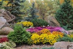 Fleurs en parc en automne Photographie stock