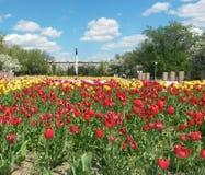 Fleurs en parc de victoire photos stock