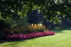 Fleurs en parc de ville photos libres de droits