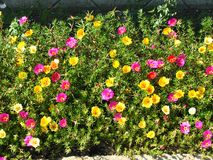 Fleurs en pierre Image libre de droits