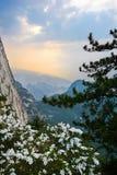 Fleurs en pleine floraison sur la falaise Photographie stock libre de droits