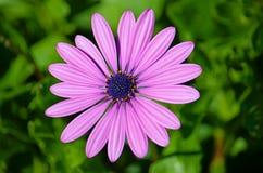 Fleurs en San Pedro de Alcantara, Marbella Photos stock