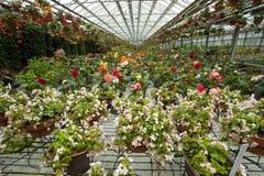 Fleurs en serre chaude photos stock