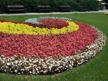 Fleurs en spirale à Sofia - été 2015 photographie stock