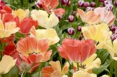 Fleurs en stationnement Photographie stock