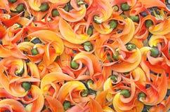 Fleurs enfoirées de teck Images stock