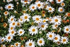 Fleurs ensoleillées images libres de droits