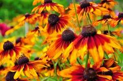 Fleurs ensoleillées de beauté de mon arrière-cour image stock