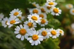 Fleurs ensoleillées macro Photographie stock libre de droits
