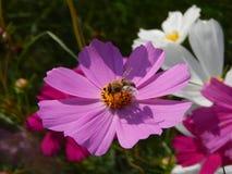 Fleurs et étés Image stock