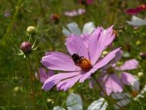 Fleurs et étés Photos libres de droits