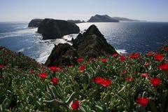 Fleurs et îles Photographie stock