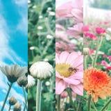 Fleurs et Photo stock