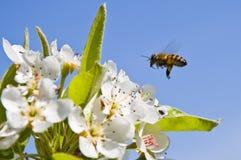 Fleurs et abeille Photographie stock libre de droits