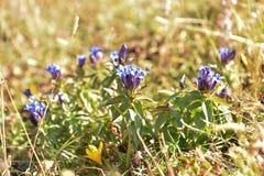 Fleurs et abeille de montagne photo libre de droits