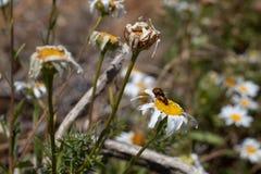 Fleurs et anomalies photos stock