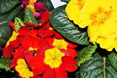 Fleurs et appréciation Images stock