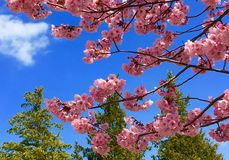 Fleurs et arbres Photos stock