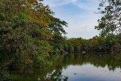 Fleurs et arbres naturels Image stock