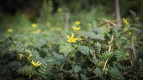 Fleurs et arbres naturels Photographie stock libre de droits
