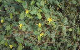 Fleurs et arbres naturels Photos stock