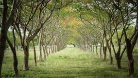 Fleurs et arbres naturels Photographie stock