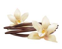 Fleurs et bâtons réalistes de vanille Icône d'illustration d'isolement par vecteur illustration libre de droits