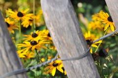 Fleurs et barrière Images stock