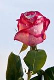 Fleurs et bijoutier Image libre de droits