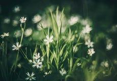 fleurs et bokeh, détail sauvage de nature photos libres de droits