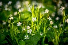 fleurs et bokeh, détail sauvage de nature Photo stock