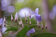 Fleurs et bourgeons Images stock