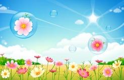 Fleurs et bulles de jardin de pré Photographie stock