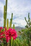 Fleurs et cactus avec le canyon de Chicamocha à l'arrière-plan en Mesa de los Santos, Colombie photographie stock