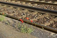Fleurs et chemin de fer de pavot Image stock