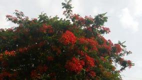 Fleurs et ciel photos libres de droits