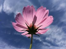 Fleurs et ciel bleu Photographie stock