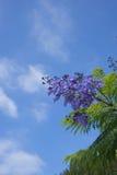 Fleurs et ciel pourpres Image libre de droits