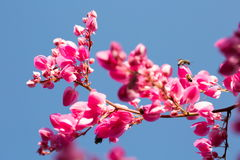 Fleurs et ciel roses Photographie stock libre de droits