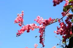 Fleurs et ciel roses Image libre de droits
