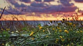 Fleurs et coucher du soleil de mer banque de vidéos